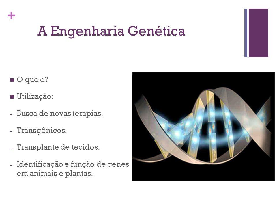 + A Engenharia Genética O que é? Utilização: - Busca de novas terapias. - Transgênicos. - Transplante de tecidos. - Identificação e função de genes em