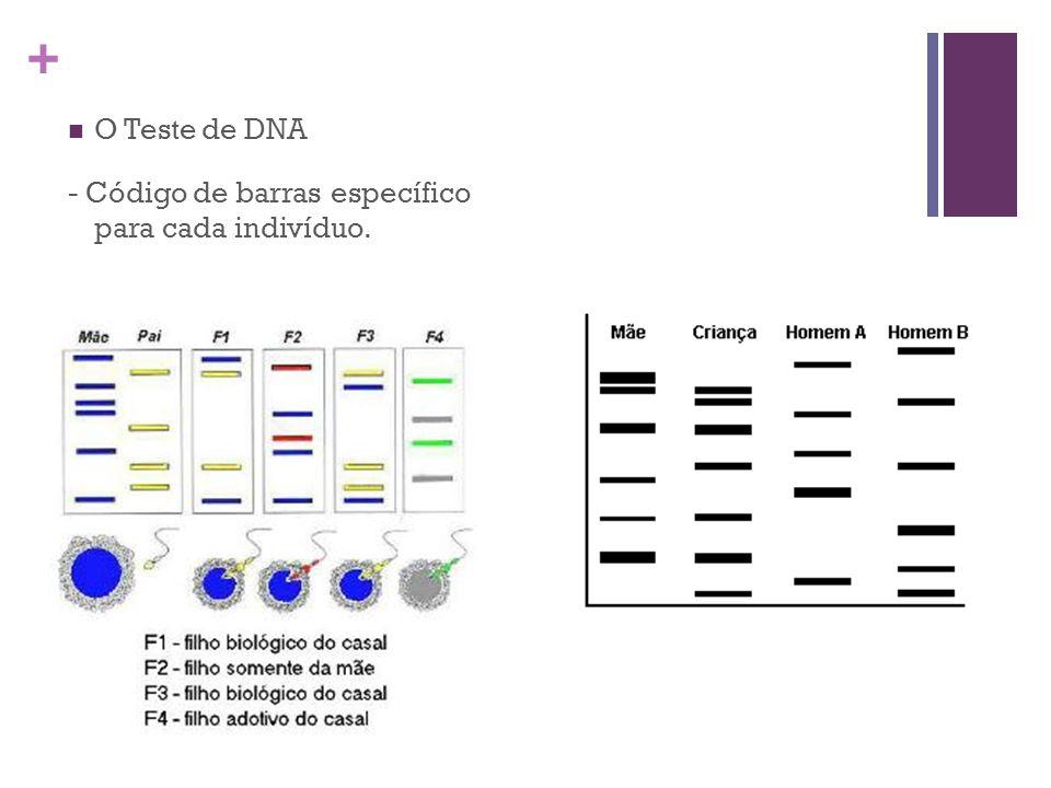 + O Teste de DNA - Código de barras específico para cada indivíduo.
