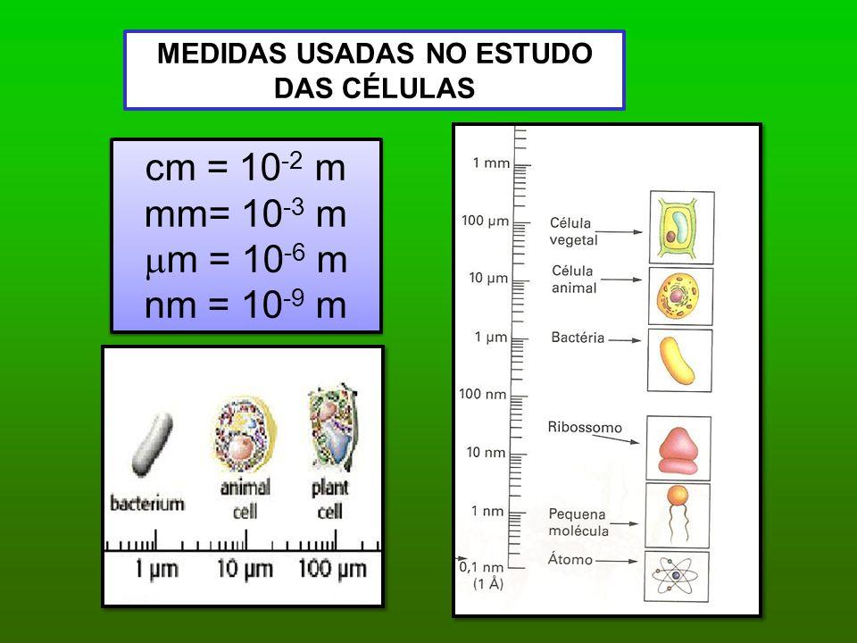MEDIDAS USADAS NO ESTUDO DAS CÉLULAS cm = 10 -2 m mm= 10 -3 m  m = 10 -6 m nm = 10 -9 m cm = 10 -2 m mm= 10 -3 m  m = 10 -6 m nm = 10 -9 m
