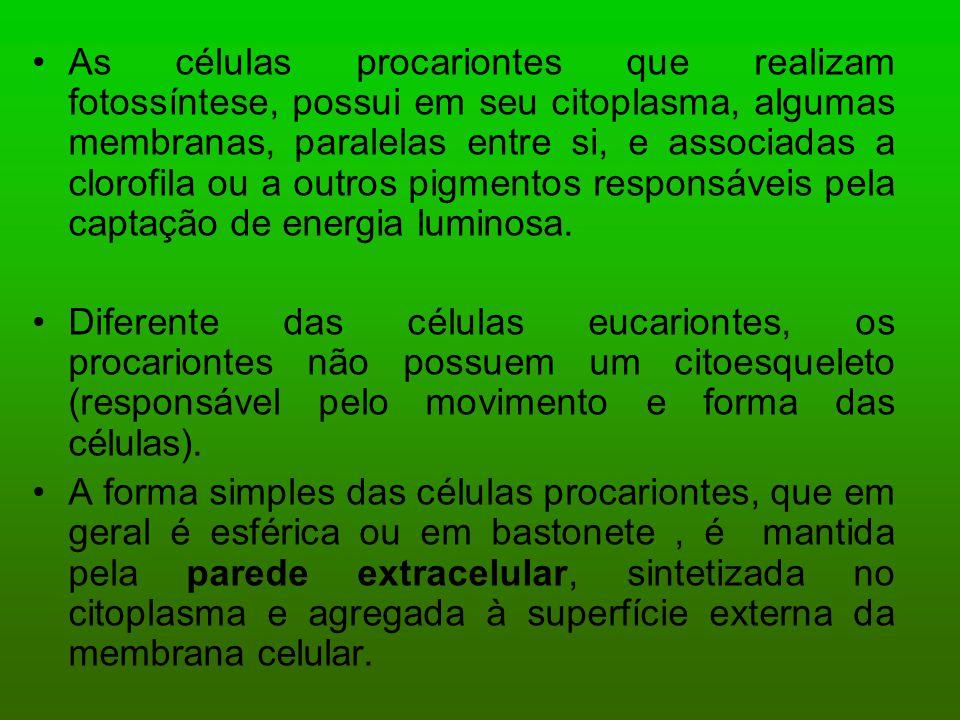 As células procariontes que realizam fotossíntese, possui em seu citoplasma, algumas membranas, paralelas entre si, e associadas a clorofila ou a outr