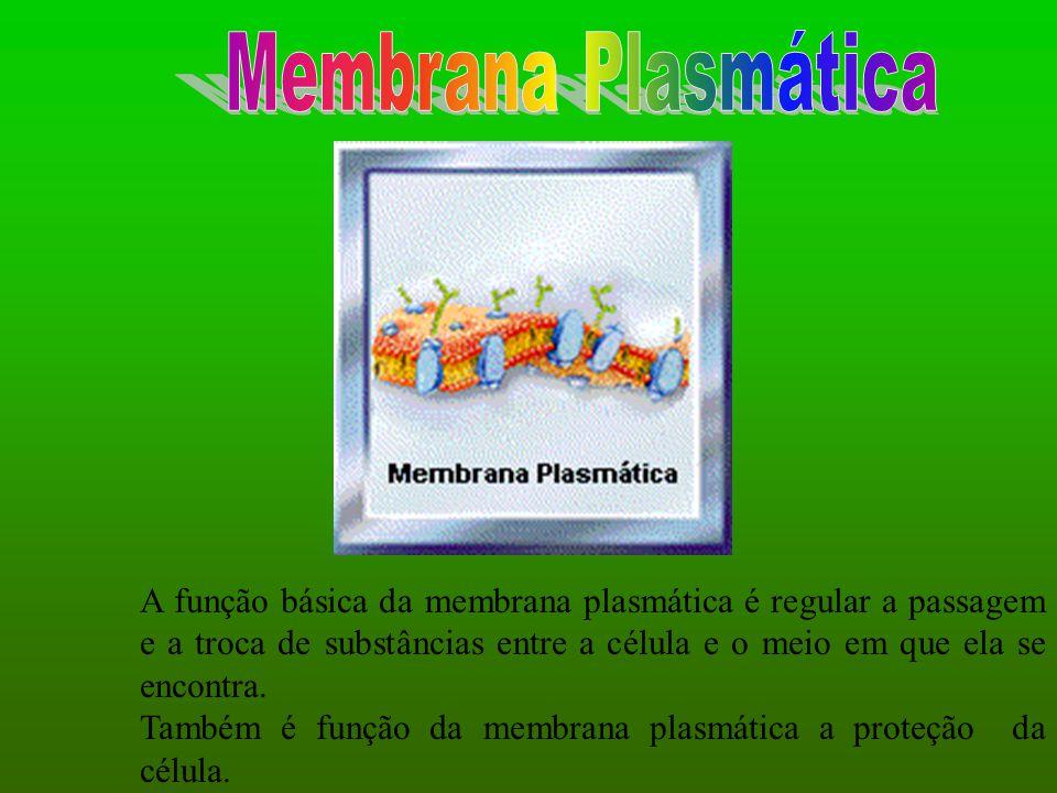 A função básica da membrana plasmática é regular a passagem e a troca de substâncias entre a célula e o meio em que ela se encontra. Também é função d