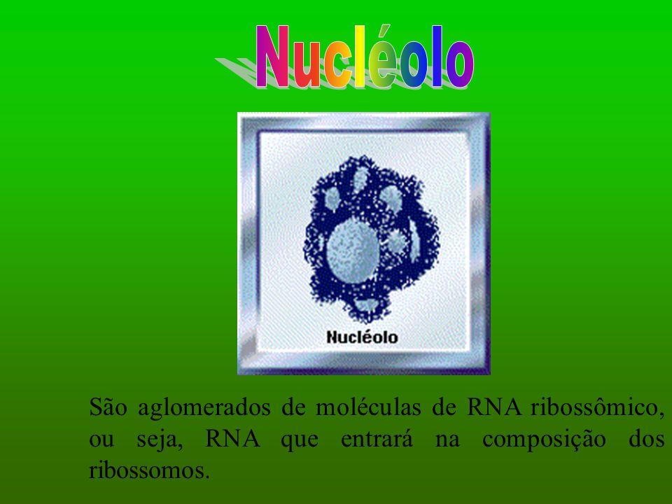 São aglomerados de moléculas de RNA ribossômico, ou seja, RNA que entrará na composição dos ribossomos.