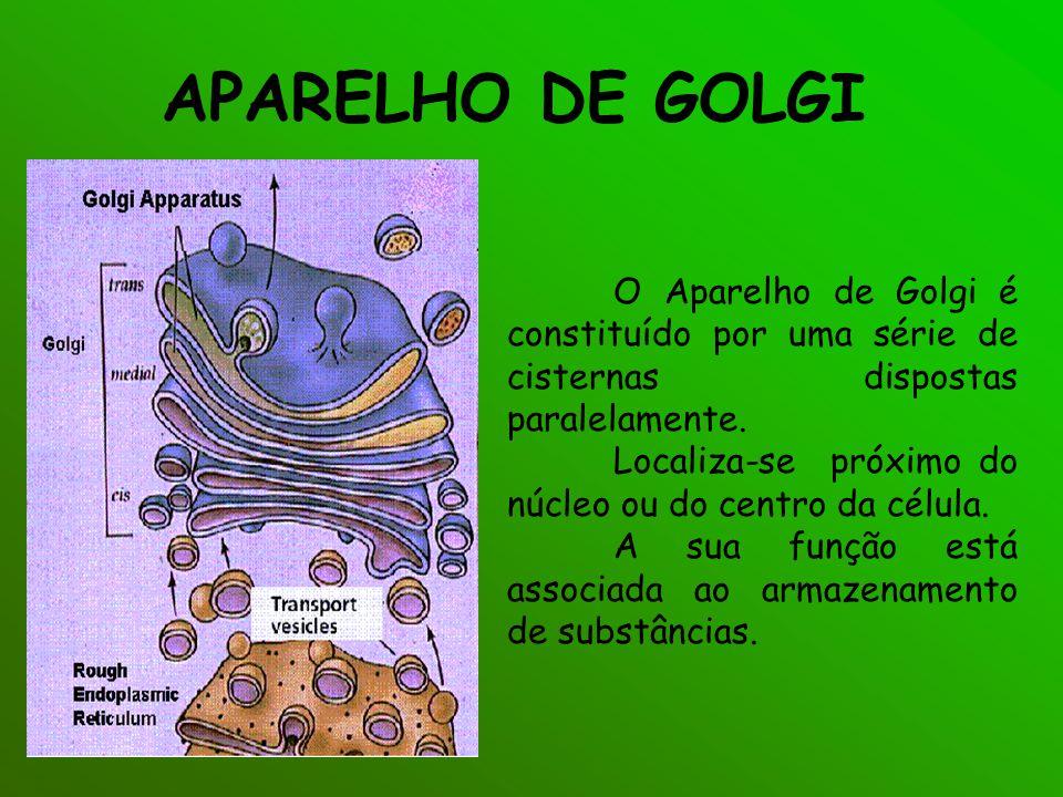 APARELHO DE GOLGI O Aparelho de Golgi é constituído por uma série de cisternas dispostas paralelamente. Localiza-se próximo do núcleo ou do centro da