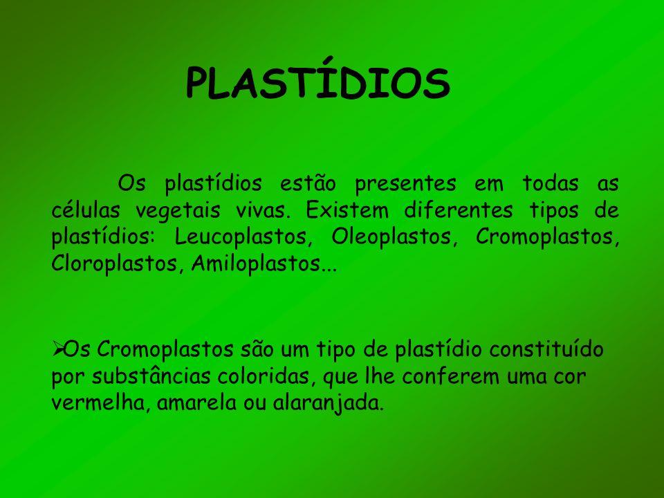 PLASTÍDIOS Os plastídios estão presentes em todas as células vegetais vivas. Existem diferentes tipos de plastídios: Leucoplastos, Oleoplastos, Cromop