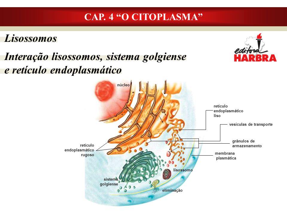 """Lisossomos Interação lisossomos, sistema golgiense e retículo endoplasmático CAP. 4 """"O CITOPLASMA"""" núcleo retículo endoplasmático liso membrana plasmá"""