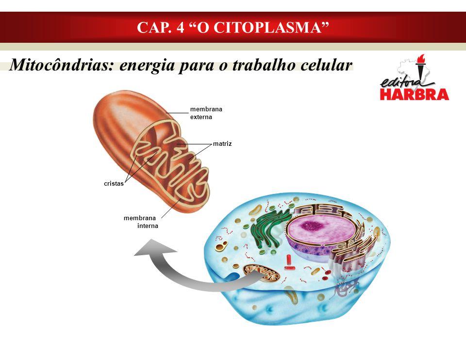 """Mitocôndrias: energia para o trabalho celular CAP. 4 """"O CITOPLASMA"""" membrana interna cristas membrana externa matriz"""