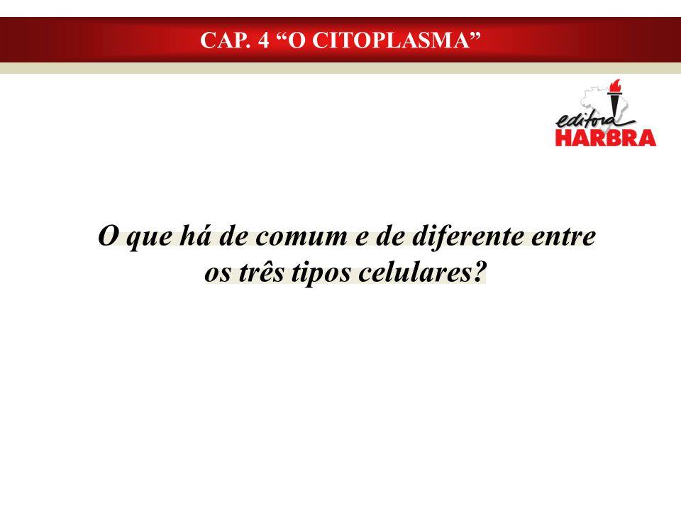 O que há de comum e de diferente entre os três tipos celulares? CAP. 4 O CITOPLASMA