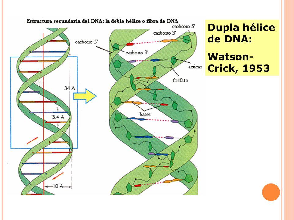 Dupla hélice de DNA: Watson- Crick, 1953
