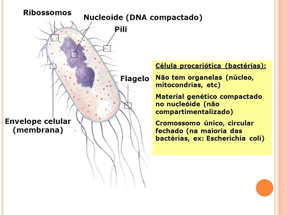 2a. Letra do códon 1a. Letra do códon Degeneração do código genético