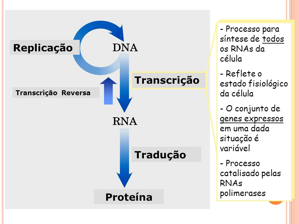 Replicação Transcrição Tradução Proteína - Processo para síntese de todos os RNAs da célula - Reflete o estado fisiológico da célula - O conjunto de genes expressos em uma dada situação é variável - Processo catalisado pelas RNAs polimerases - Processo para síntese de todos os RNAs da célula - Reflete o estado fisiológico da célula - O conjunto de genes expressos em uma dada situação é variável - Processo catalisado pelas RNAs polimerases Transcrição Reversa