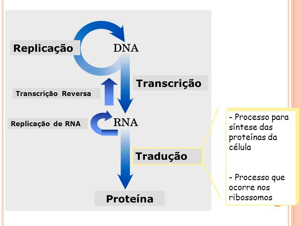 Replicação Transcrição Tradução Proteína - Processo para síntese das proteínas da célula - Processo que ocorre nos ribossomos - Processo para síntese das proteínas da célula - Processo que ocorre nos ribossomos Transcrição Reversa Replicação de RNA