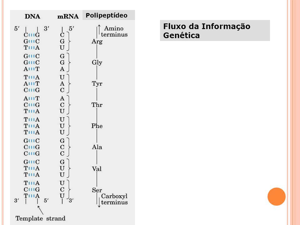 Fluxo da Informação Genética Polipeptídeo
