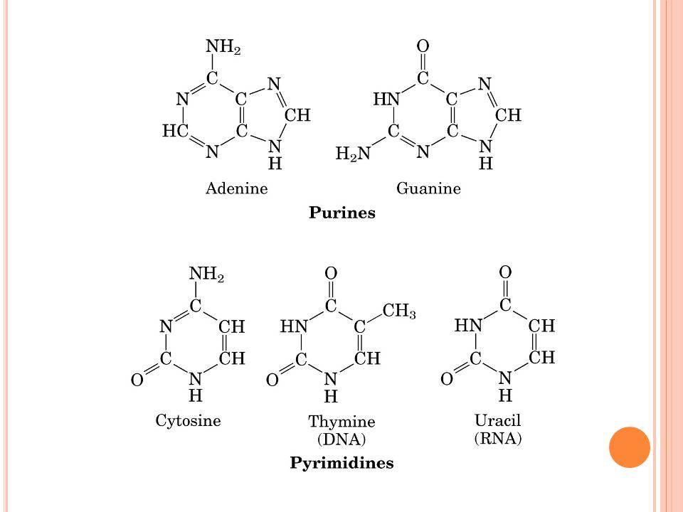Procariotos Eucariotos Splicing