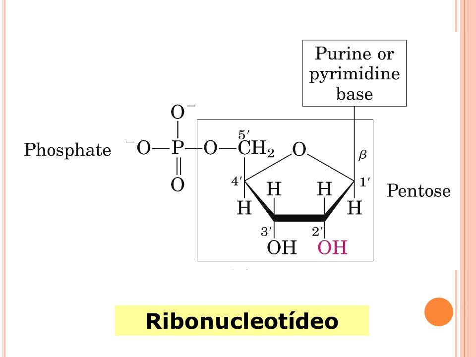 Desoxirribonucleotídeos