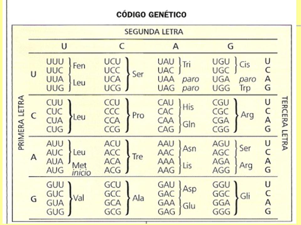 Código genético  O código genético é universal: - É o mesmo em todos os seres vivos.  Códon: sequência de três bases nitrogenadas (trinca) do DNA. -