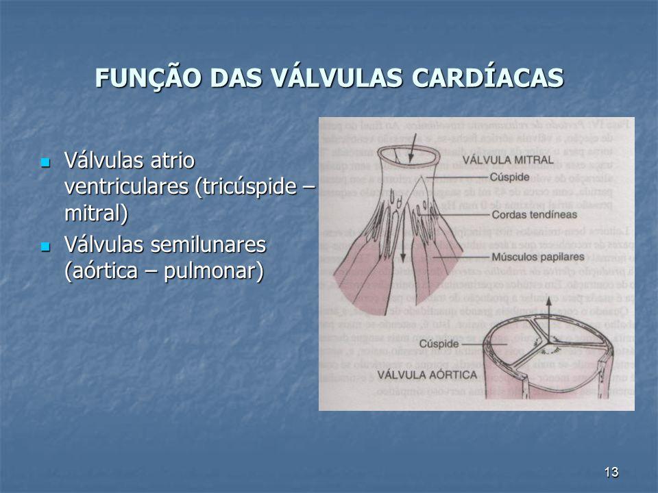 13 FUNÇÃO DAS VÁLVULAS CARDÍACAS Válvulas atrio ventriculares (tricúspide – mitral) Válvulas atrio ventriculares (tricúspide – mitral) Válvulas semilu