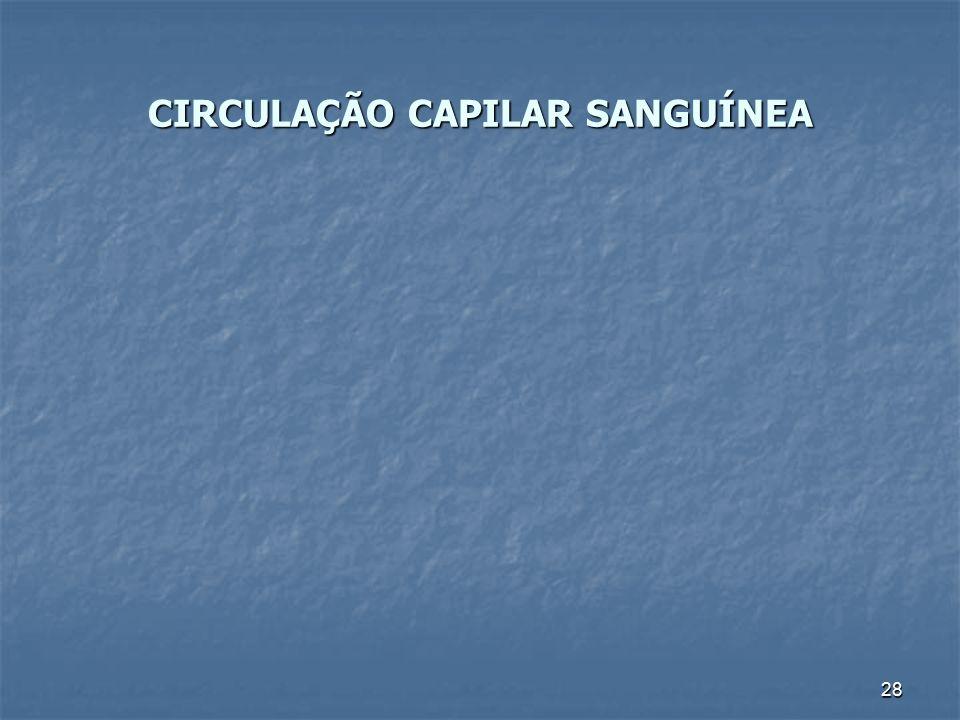 28 CIRCULAÇÃO CAPILAR SANGUÍNEA