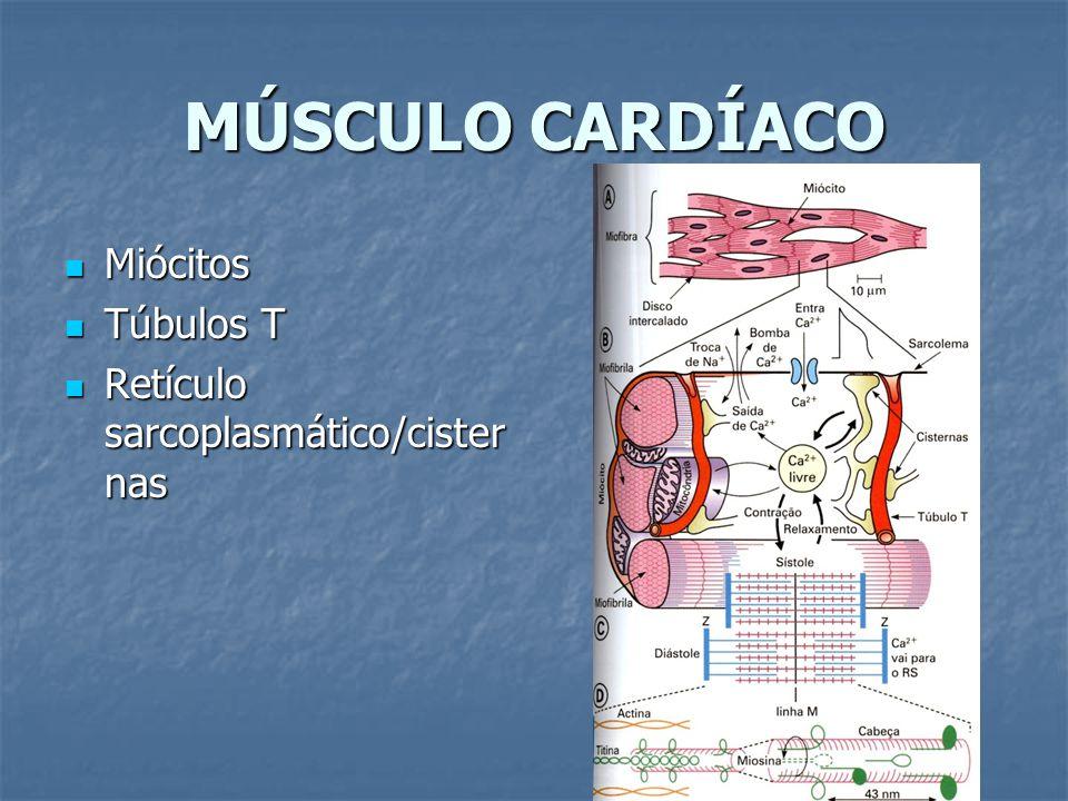 MÚSCULO CARDÍACO Miócitos Miócitos Túbulos T Túbulos T Retículo sarcoplasmático/cister nas Retículo sarcoplasmático/cister nas