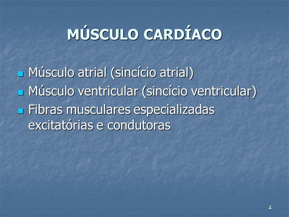 4 MÚSCULO CARDÍACO Músculo atrial (sincício atrial) Músculo atrial (sincício atrial) Músculo ventricular (sincício ventricular) Músculo ventricular (s