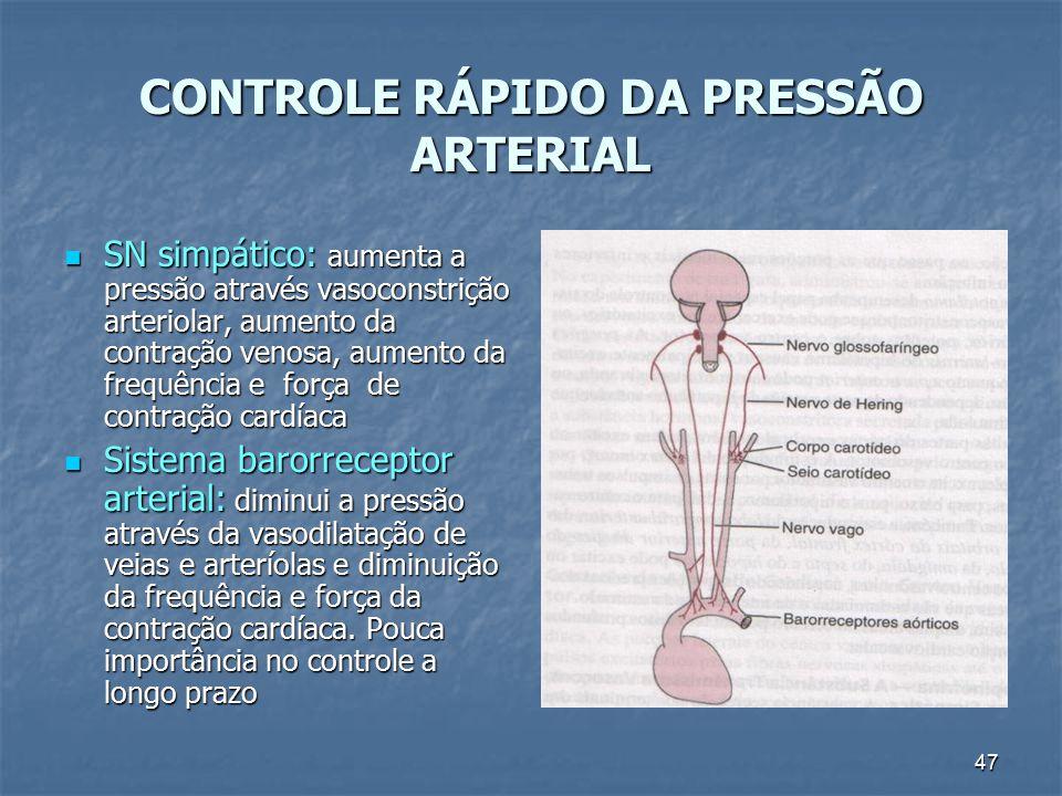 47 CONTROLE RÁPIDO DA PRESSÃO ARTERIAL SN simpático: aumenta a pressão através vasoconstrição arteriolar, aumento da contração venosa, aumento da freq