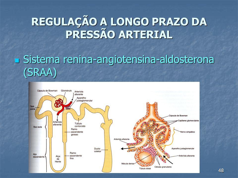 48 REGULAÇÃO A LONGO PRAZO DA PRESSÃO ARTERIAL Sistema renina-angiotensina-aldosterona (SRAA) Sistema renina-angiotensina-aldosterona (SRAA)