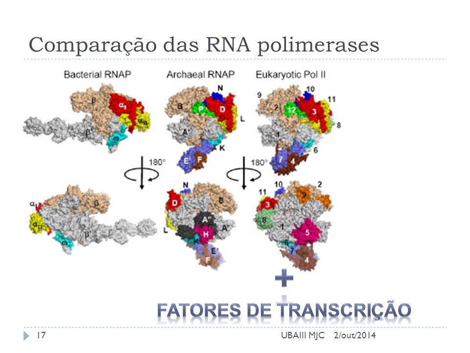 Comparação das RNA polimerases 2/out/2014UBAIII MJC17