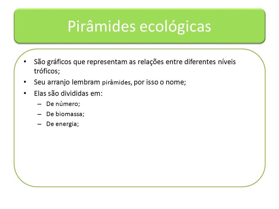 Pirâmides ecológicas São gráficos que representam as relações entre diferentes níveis tróficos; Seu arranjo lembram pirâmides, por isso o nome; Elas são divididas em: – De número; – De biomassa; – De energia;
