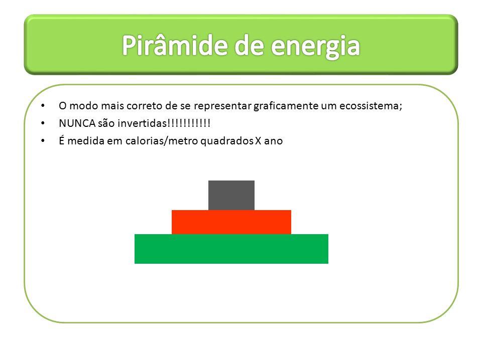 O modo mais correto de se representar graficamente um ecossistema; NUNCA são invertidas!!!!!!!!!!.