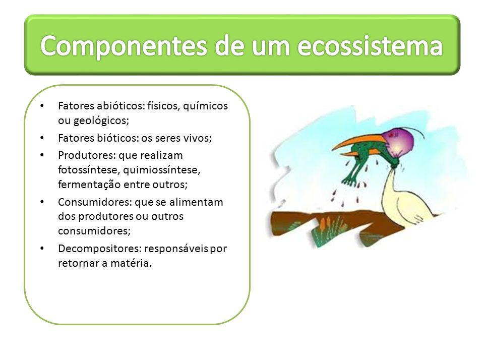 Autótrofos: fabricam seu próprio alimento; Heterótrofos: consomem outros organismos: – Herbívoros – Carnívoros – Onívoros – Decompositores – Detritívoros – Necrófagos