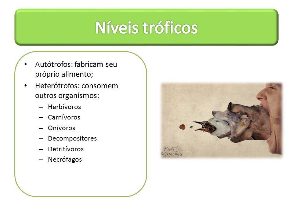 Dependência do metabolismo; Participação na fotossíntese; Participação na reprodução;