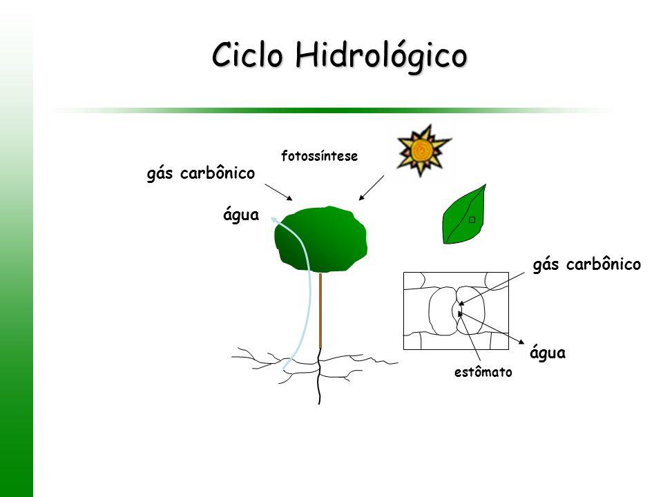Ciclo Hidrológico estômato gás carbônico água gás carbônico fotossíntese