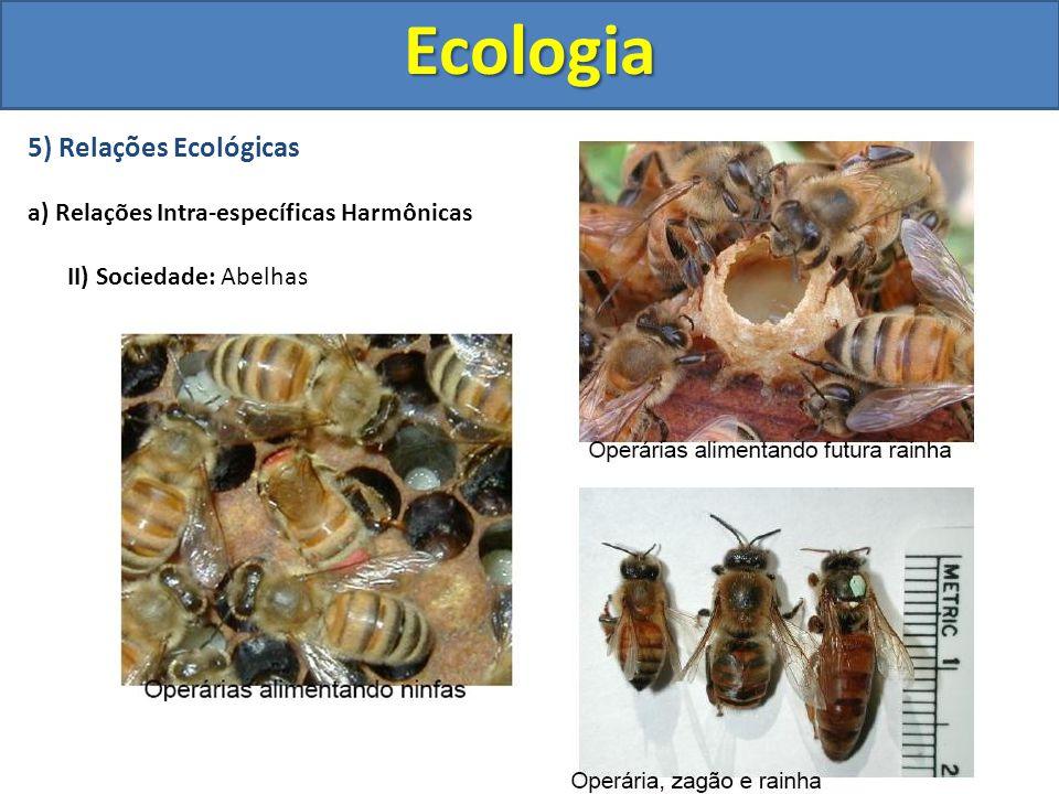 5) Relações Ecológicas a) Relações Intra-específicas Harmônicas II) Sociedade: AbelhasEcologia