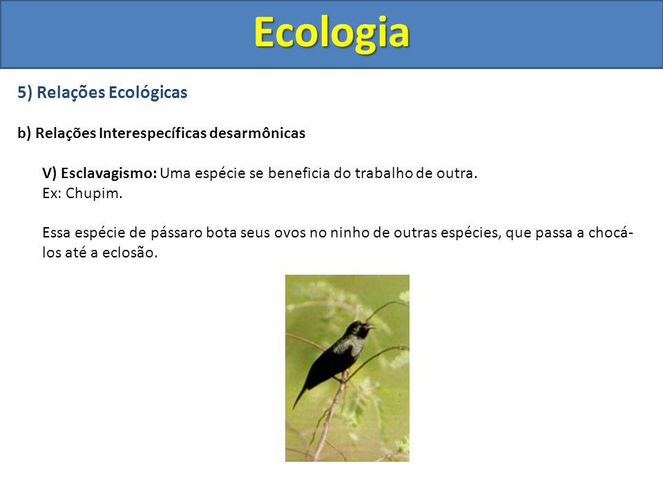 5) Relações Ecológicas b) Relações Interespecíficas desarmônicas V) Esclavagismo: Uma espécie se beneficia do trabalho de outra. Ex: Chupim. Essa espé