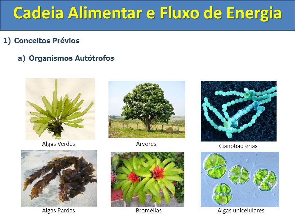 1)Conceitos Prévios a)Organismos Autótrofos Cadeia Alimentar e Fluxo de Energia Algas VerdesÁrvores Bromélias Cianobactérias Algas unicelularesAlgas P