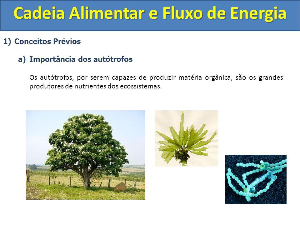 1)Conceitos Prévios a)Importância dos autótrofos Os autótrofos, por serem capazes de produzir matéria orgânica, são os grandes produtores de nutriente