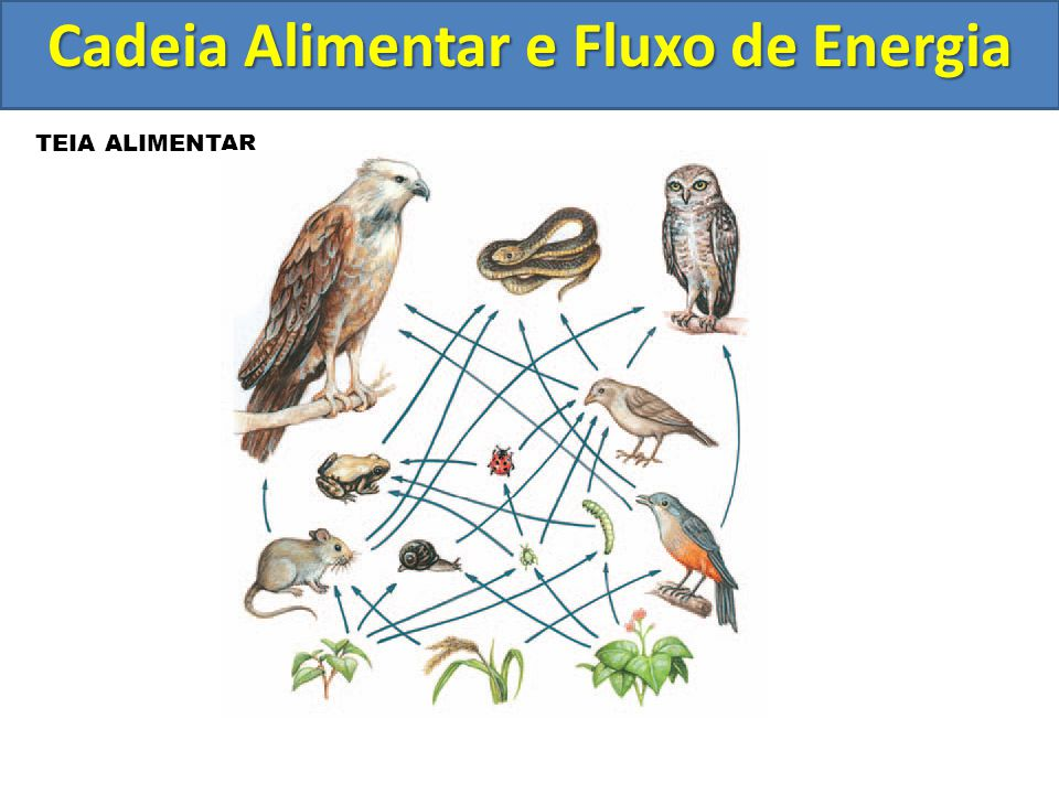 TEIA ALIMENTAR Cadeia Alimentar e Fluxo de Energia