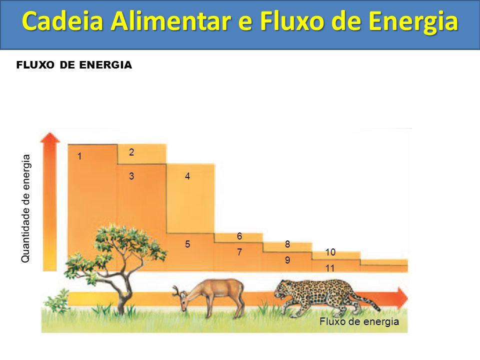 FLUXO DE ENERGIA Fluxo de energia 1 2 8 9 10 11 43 5 6 7 Quantidade de energia Cadeia Alimentar e Fluxo de Energia
