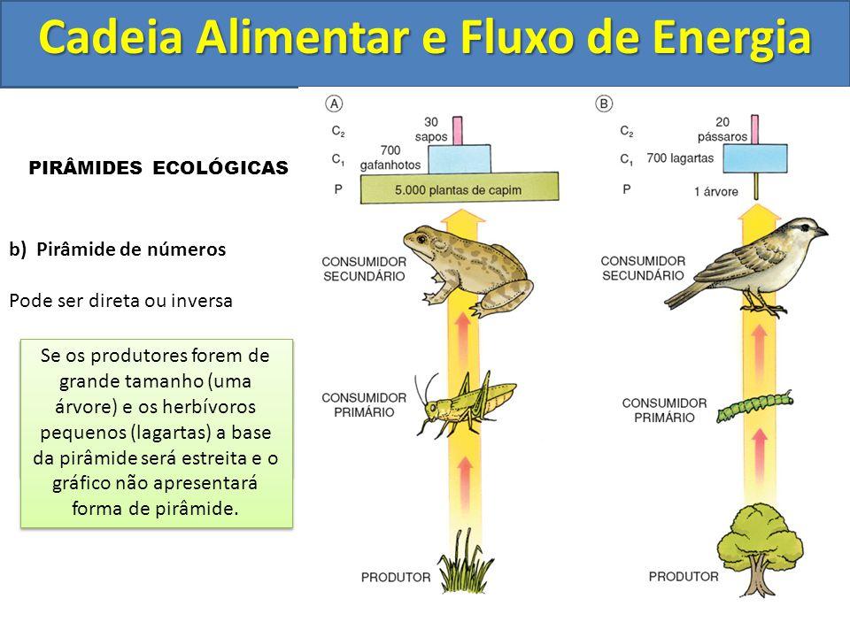 Cadeia Alimentar e Fluxo de Energia PIRÂMIDES ECOLÓGICAS b) Pirâmide de números Pode ser direta ou inversa Se os produtores forem organismos pequenos