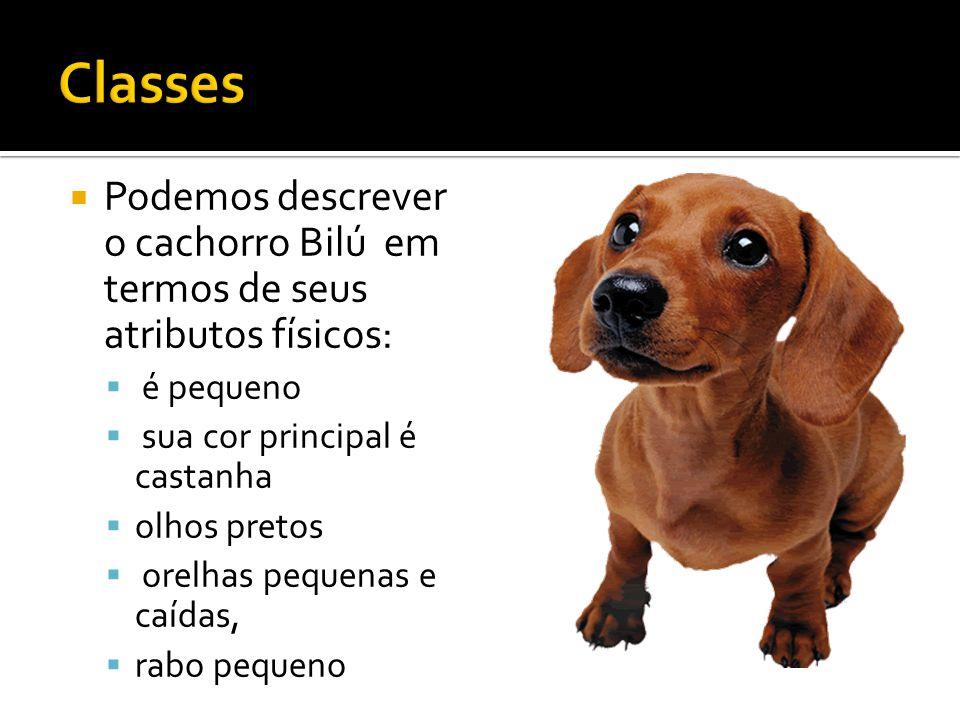  Podemos descrever o cachorro Bilú em termos de seus atributos físicos:  é pequeno  sua cor principal é castanha  olhos pretos  orelhas pequenas