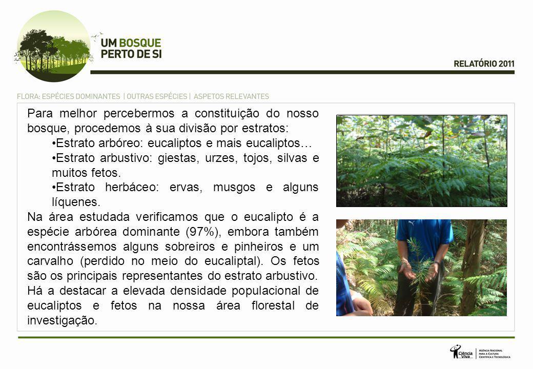 Abelha Para melhor percebermos a constituição do nosso bosque, procedemos à sua divisão por estratos: Estrato arbóreo: eucaliptos e mais eucaliptos… Estrato arbustivo: giestas, urzes, tojos, silvas e muitos fetos.
