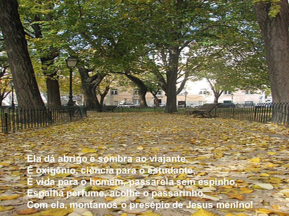 Sou da natureza uma contemplativa, Vejo o Criador em obra magnífica, A árvore valorizando a paisagem, Colorindo de verde vastas paragens, Com suas flo