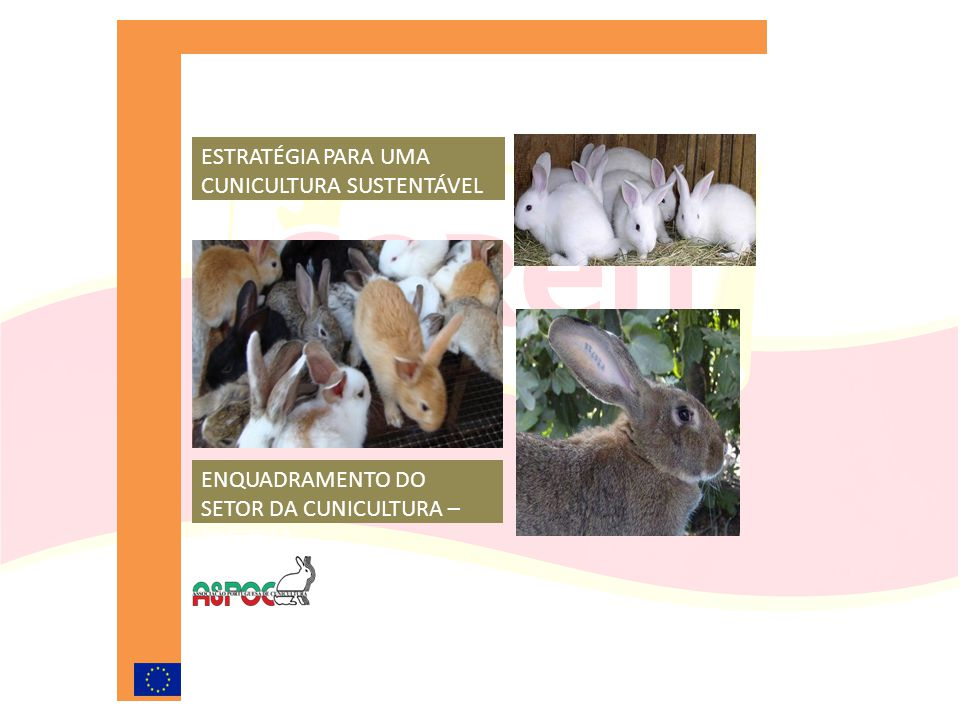Dossier Explicar toda a cadeia de valor Valorizar os resultados produtivos A presença da mão-de-obra feminina ser superior a 55% Portugal ser um país deficitário Clima e qualidade da água ideal para a produção de coelho