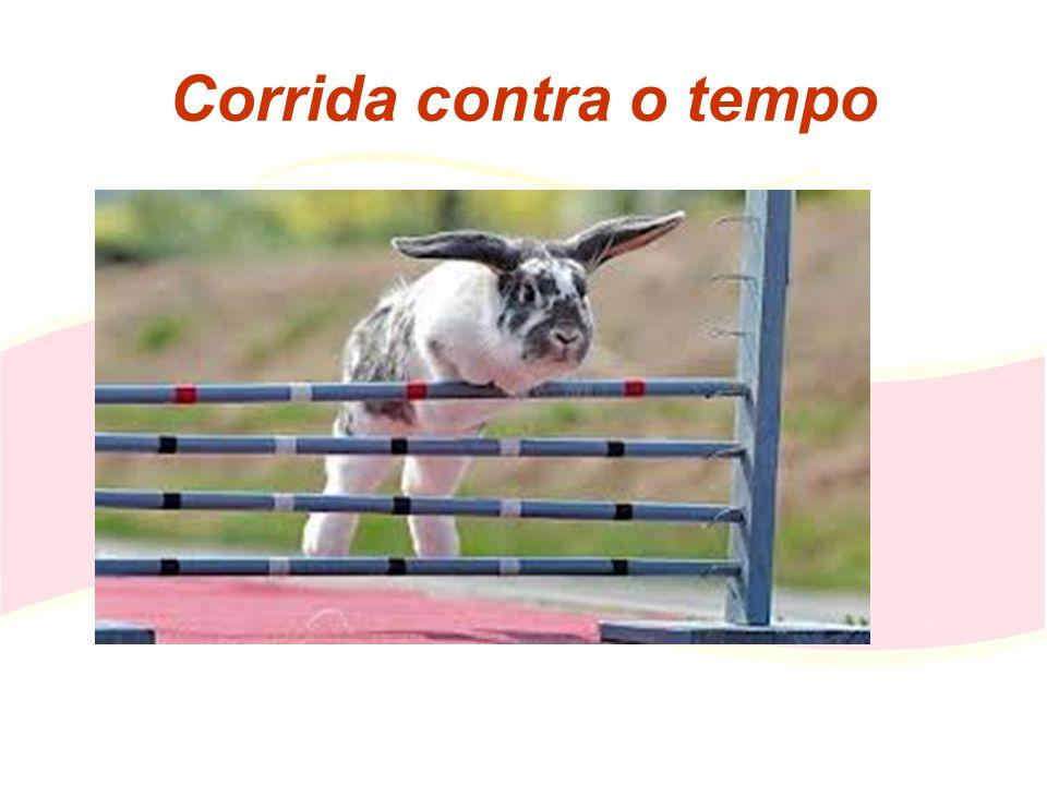 Objectivos Valorizar a cunicultura Portuguesa Defender toda a cadeia de valor Participar nos subsídios directos da PAC Colocar a Cunicultura na próxima PAC Apoio à modernização das explorações Portugal tornar-se auto-suficiente