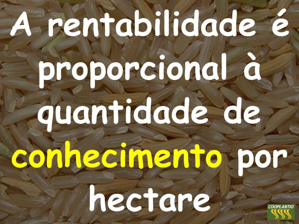A rentabilidade é proporcional à quantidade de conhecimento por hectare