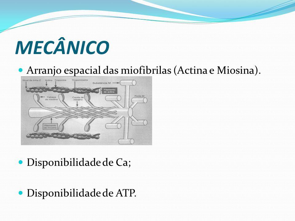 MECÂNICO Arranjo espacial das miofibrilas (Actina e Miosina). Disponibilidade de Ca; Disponibilidade de ATP.
