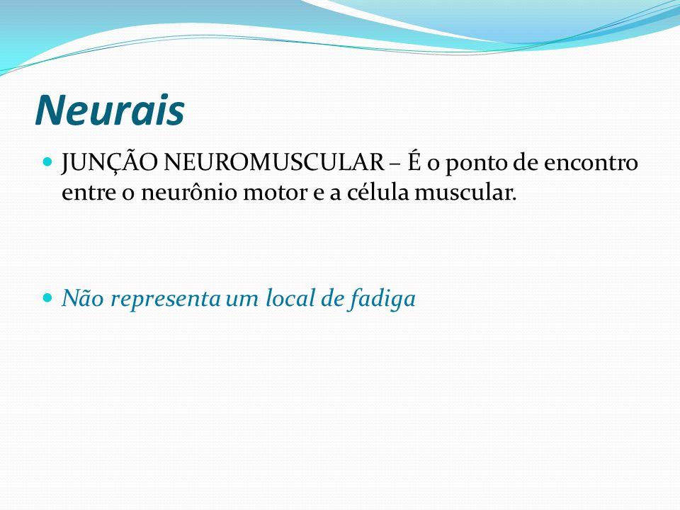 Neurais JUNÇÃO NEUROMUSCULAR – É o ponto de encontro entre o neurônio motor e a célula muscular. Não representa um local de fadiga