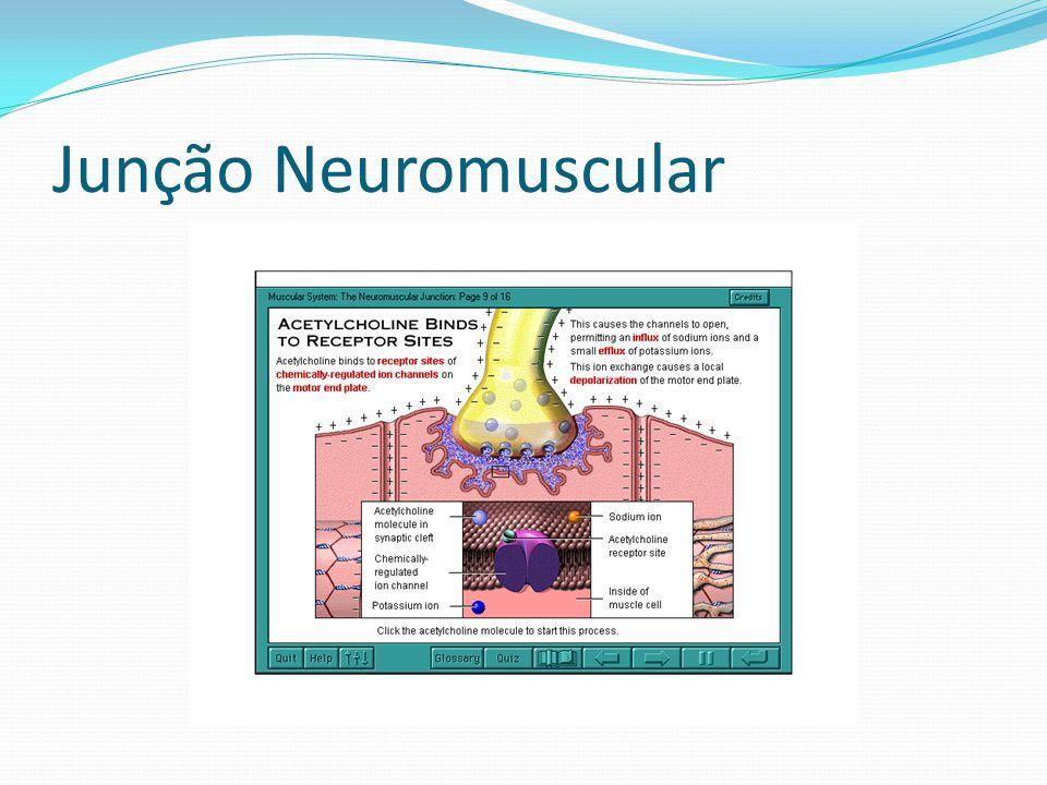 Junção Neuromuscular