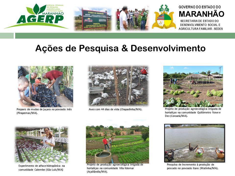 GOVERNO DO ESTADO DO MARANHÃO SECRETARIA DE ESTADO DO DESENVOLVIMENTO SOCIAL E AGRICULTURA FAMILIAR - SEDES Ações de Pesquisa & Desenvolvimento Projet