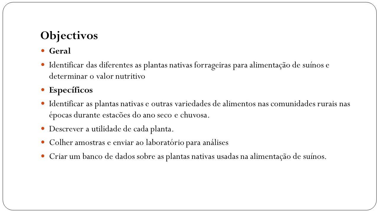 Objectivos Geral Identificar das diferentes as plantas nativas forrageiras para alimentação de suínos e determinar o valor nutritivo Específicos Ident