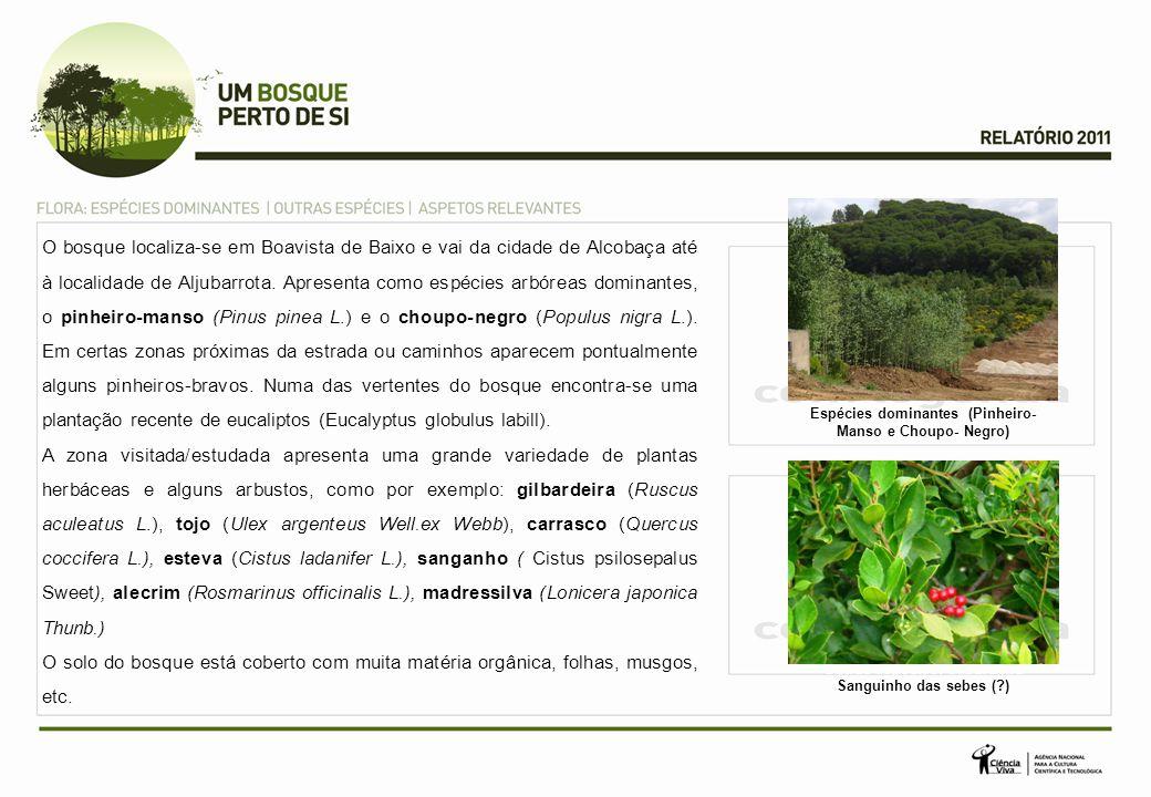 O bosque localiza-se em Boavista de Baixo e vai da cidade de Alcobaça até à localidade de Aljubarrota.